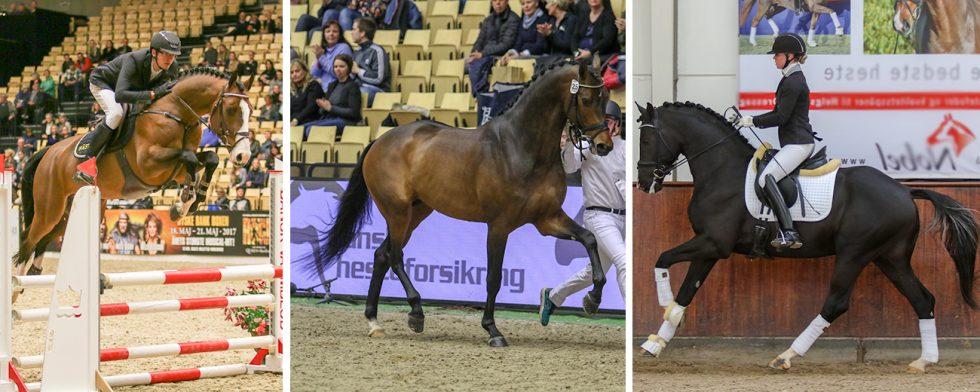 Den här trion har fått rejält med ston, från vänster Casanova Hästak, Blue Hors Zackerey och Suarez. Foto/montage: Kim C Lundin