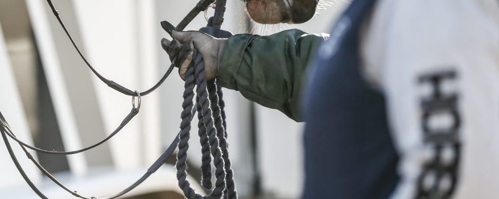 Den tävlande hästen har EHV-1, visar prover. Foto: Fredrik Jonsving