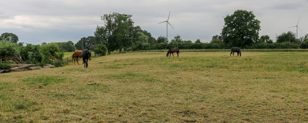 Sommaren brukar vara en period när det ekonomiska trycket lättar genom att hästar kan gå på bete, i år är det inte så. Foto: Kim C Lundin