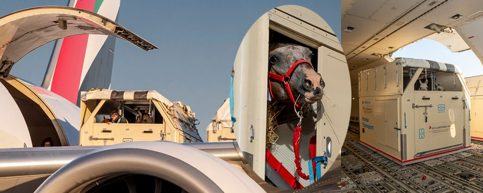 Se bilder från hästlastningen i Liège Foto: FEI/ Hippo Foto - Dirk Caremans