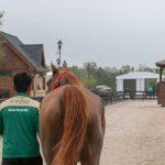 Bahrain häst, detta är den som ska vara redo för 16 mil.  Foto: Kim C Lundin