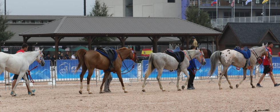 Det här är bland de mest musklade och fräscha hästarna, Spanska landslaget skrittar. Foto: Kim C Lundin