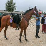 Den sortens distanshäst jag skulle vilja se mer av, stolt, alert och med muskler. Foto: Kim C Lundin