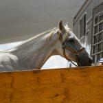 Hästarna kommer till Greeneville Spartanburg, South Carolina (USA)  Foto: FEI/Tori Repole