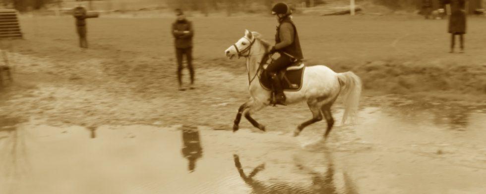 En annan fin vit ponny får illustrera det häftiga ponnyprat som du får höra i klippet. Foto: Kim C Lundin