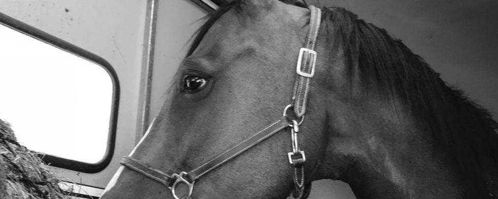 Om vi kan mindre än vi tror utsätts hästarna indirekt för risker. Foto: Kim C Lundin
