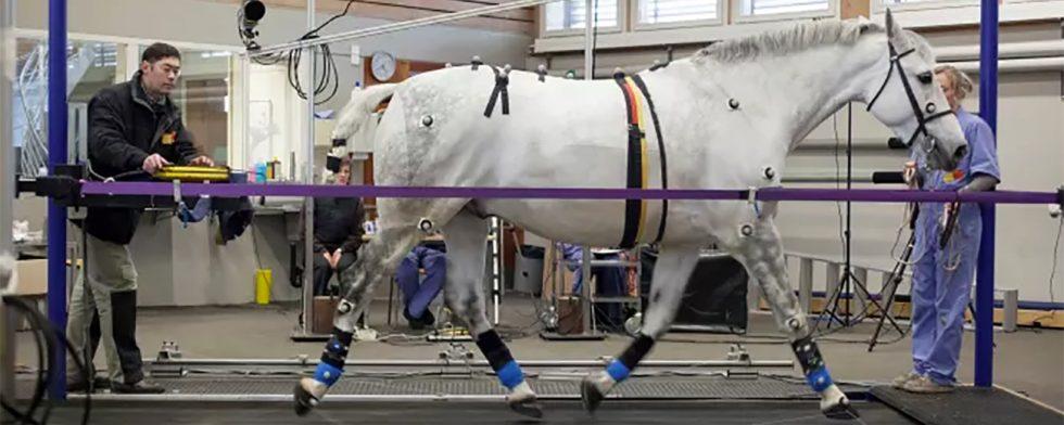 Häst på rullmatta för kraftmätning Foto: Mike Weishaupt