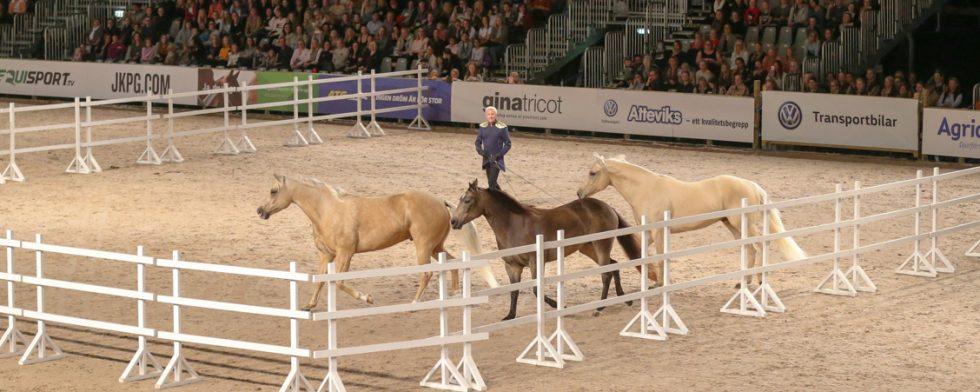 Tobbe Larsson, hästartist, är uppskattad av publiken. Foto: Fredrik Jonsving
