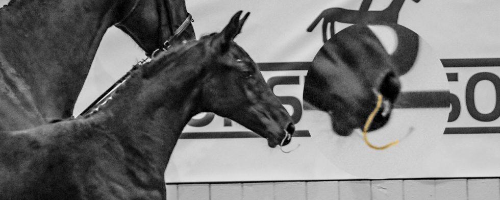 Se upp för hästar med näsflöde, allt snorigt och slemmigt är inte kvarka men var försiktig. Foto: Kim C Lundin