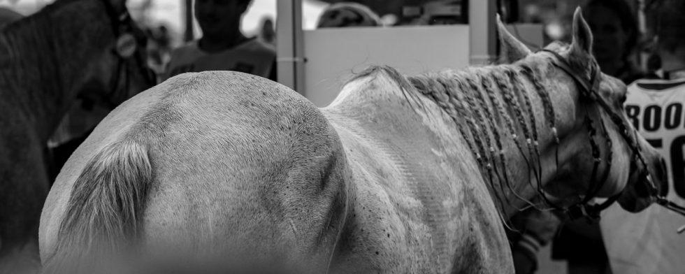 Två distanshästar har redan dött i lopp under vintersäsongen. Bilden är inte relaterad till de två döda hästarna Foto: Kim C Lundin