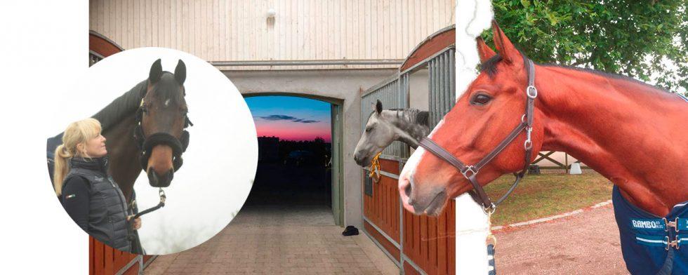 Jenny Talinsson med en av hästarna som passerat genom stallgången på Grevlundagården Foto: Privat