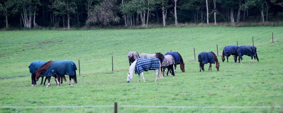 Elever utan häst måste skriva på samma avtal som de med häst, det menar anmälaren. Hästarna på bilden är inte inblandade i händelsen. Foto: Fredrik Jonsving