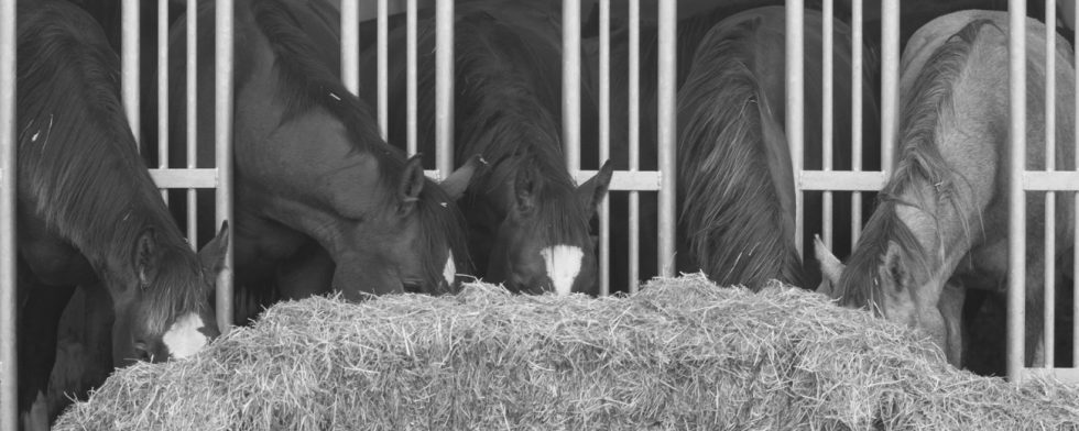Smitta överförs mellan hästar Foto: Kim C Lundin