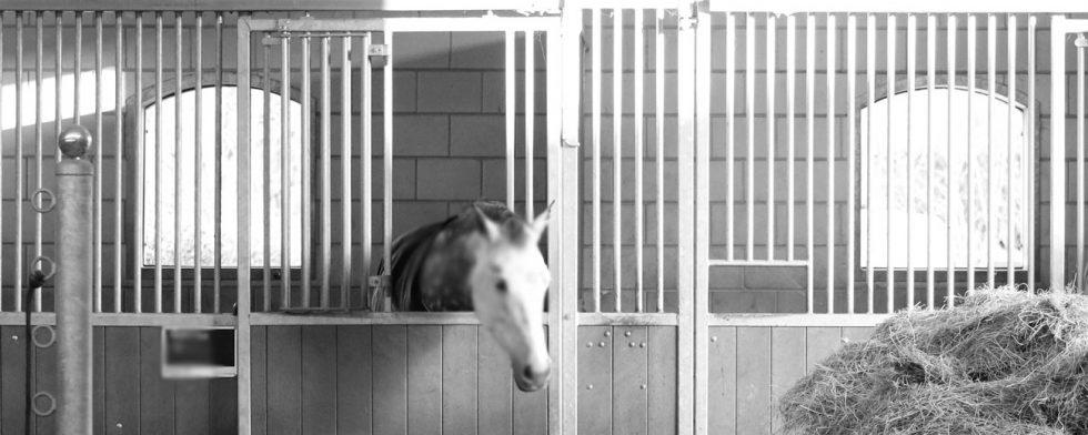 Flera svenskar väljer att isolera hästarna efter hemkomst från grannlandet. Arkivbild: Kim C Lundin
