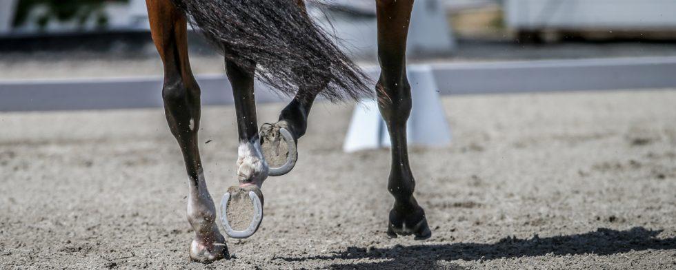artros häst behandling