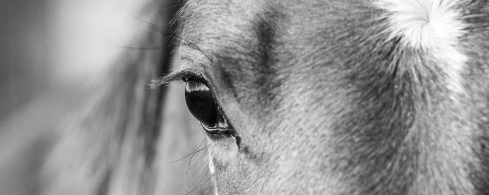 Hela djurkliniken i Bjerke isoleras.  Foto: Fredrik Jonsving