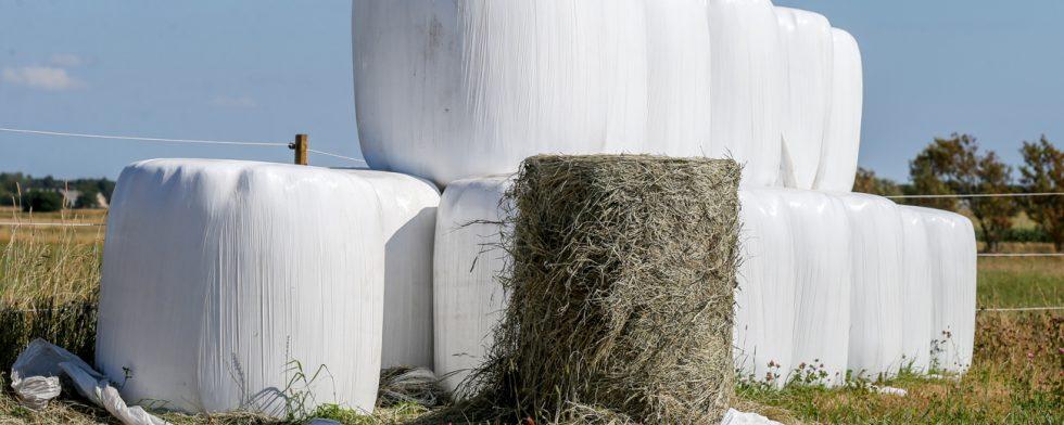 Hö är en bristvara. Nu har 200 balar stulits från en gård. Foto: Fredrik Jonsving