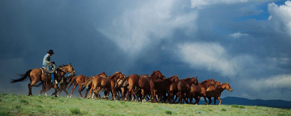 Mustangen är en av USA:s vildhästar.