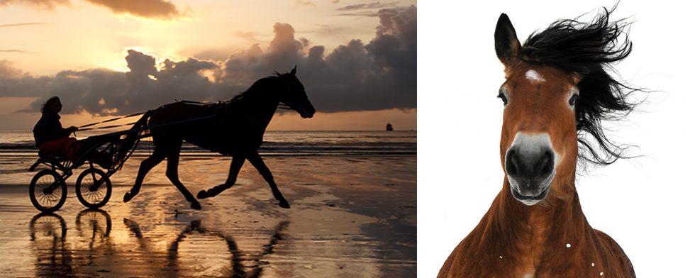 Är hästar med mjölmule mer lågpresterande? Det utreder forskare.