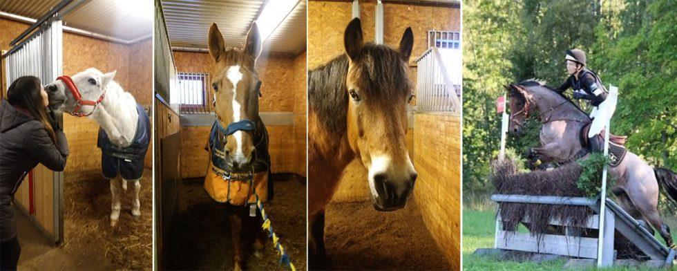 Veteranerna Obelix, Fuxen och Primm på Morf kan snart få sköna behandlingar. Olivia Ryman (till höger) hoppas på stort deltagande i tävlingarna. Foto: Privat