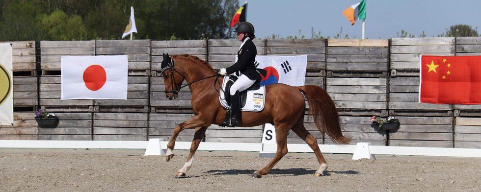 Bästa svenska ponnyekipage, Wynja Eriksdotter Rubin och Wacos Rache MW, i CDIP Sint-Truiden. Pressbild.