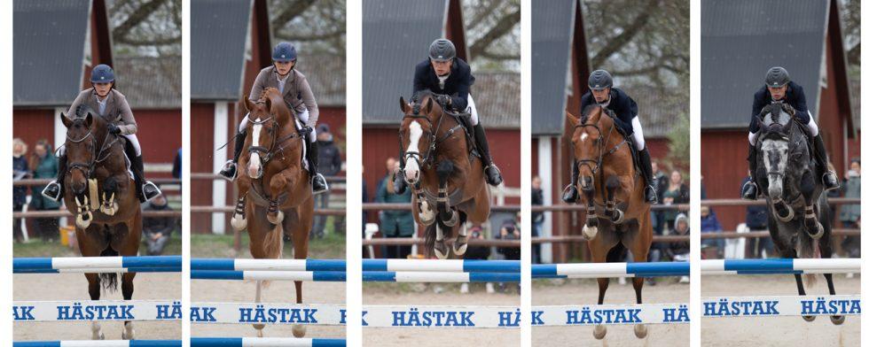 En femklöver fina hopphingstar: från vänster Quintet, Casall Sem, Casanova Hästak, Viking Hästak och Kannando Hästak Foto: Kim C Lundin