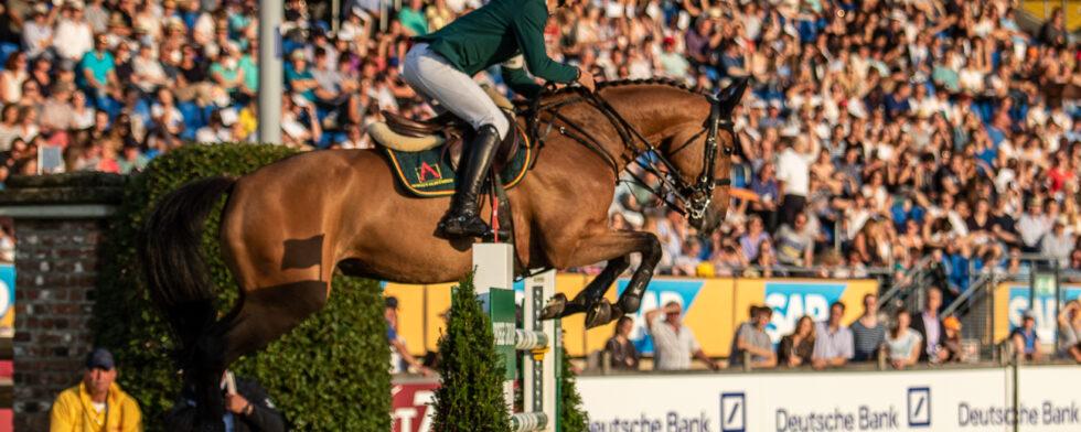 Steve Guerdat SUI Hofgut Albführen GmbHAlbfuehren´s Maddox - SWB Stallion  Bay  2011  Cohiba 1198 x Maraton Foto: Kim C Lundin