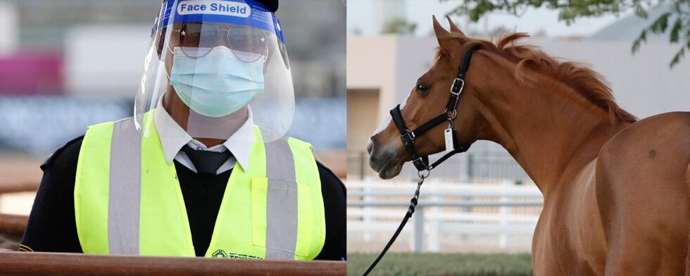 virus, mask, visir, ansiktsmask, smitta, EHV-1