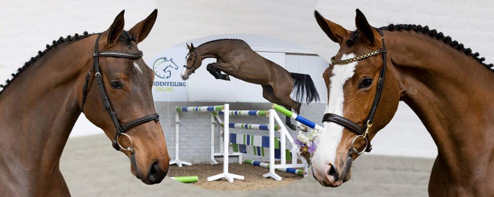 Stona Noucka u't Frankryk och Apphira H Z är bland de som auktioneras ut av Paardenveiling online Foto: Paardenveiling online